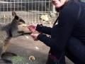 Angie feeding Wallaby